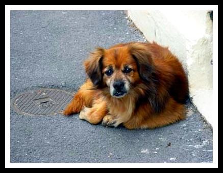chien perdu sans collier
